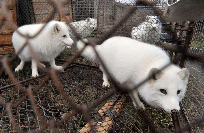 15примеров борьбы заправа животных, которые делают наш мир немного человечнее Интересное