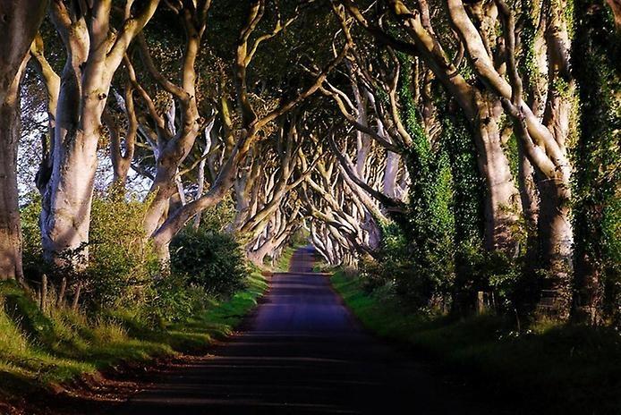 Тёмный тупик: ирландская дорога, овеянная легендами