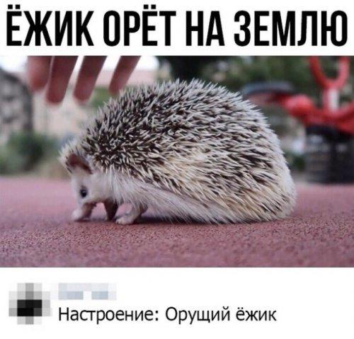 Прикольные картинки и фото - для настроения mir-interes.info